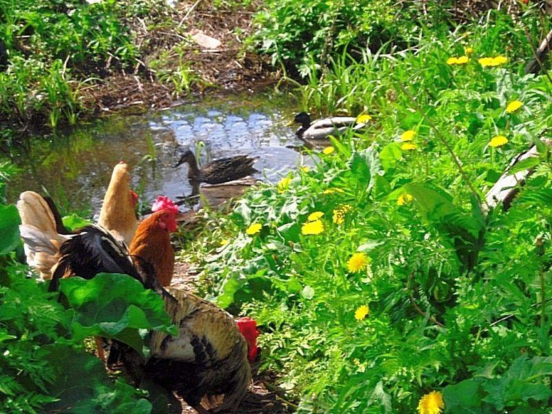 SAM_0288 незваные гости из дикой природы