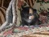 SAM_1078 Наш котёнок