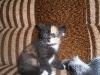 SAM_1082 Маленький пушистый котёнок