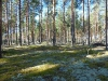 dscn3337 Северный лес