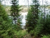 P1060175 из-за леса реки не видно