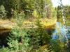 P1060346 Осень на Севере