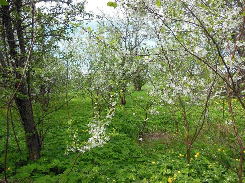 DSCN4719 Весна пришла