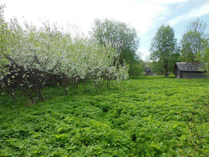 DSCN4723 Весна в деревне