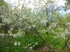 DSCN4720 Вишнёвый сад